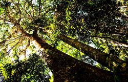 Mato Grosso reduz desmatamento no bioma amazônico em 26% no mês de junho