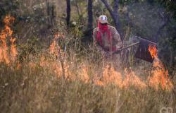 Estado é responsável por 25% das queimadas de todo o país