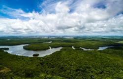 Universidades da Amazônia acertam pesquisas em bioeconomia