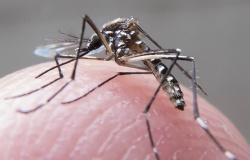 MT tem 13 mortes e mais de 26 mil casos de dengue