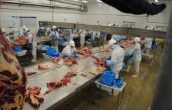 Frigorífico abre 300 vagas de emprego em Várzea Grande (MT)