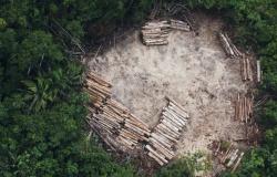 Exploração madeireira aumenta 60% em MT e 37% foi explorada de forma ilegal