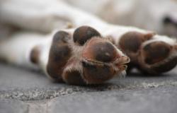 Diretoria alerta para crescimento exponencial em casos de maus-tratos de animais; 2021 soma 300 denúncias em 3 meses