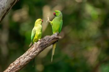 Natureza e humor: os finalistas do Comedy Wildlife Photography Awards