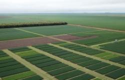 CAD Parecis terá foco no desenvolvimento das culturas de entressafra