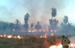 Medidas simples de prevenção podem evitar incêndios em ambiente rural