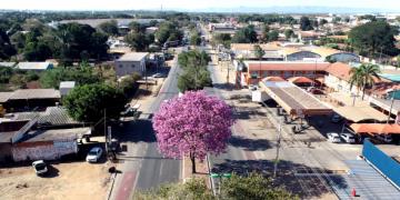 Ipês começam a florir e proporcionam um verdadeiro espetáculo natural pelas ruas de Cuiabá