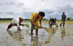 Plantio atrasa na Índia, com chuvas escassas e receios sobre a produtividade