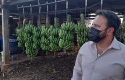 Deputado discute a isenção de tributos nas operações interestaduais de bananas