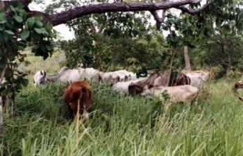 Artigo Manejo de Pastagem Ecológica e a produção de água de Jurandir Melado é publicado pelo site ECODEBATE e a TRIBUNA REGIONAL de Jarinu SP