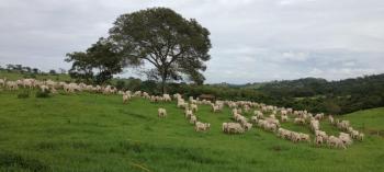 Fazendas de Urutaí Goiás colhem sucesso com o Manejo de Pastagem Ecológica