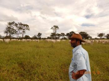 Pastoreio Voisin na Fazenda P.U. - Urutaí GO - Foto de Jurandir Melado
