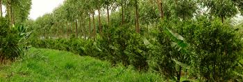 Video Fazenda da Toca Com Ernst Gotsch - A Agrofloresta em larga escala é possível com a mecanização e muita criatividade...