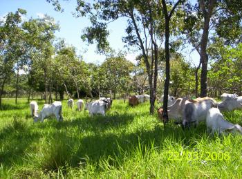 Pastagem Ecológica na Fazenda Ecológica - Foto de Jurandir Melado