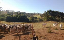 Fazenda P.U. de Urutaí GO inaugura sistema de Desmama Racional