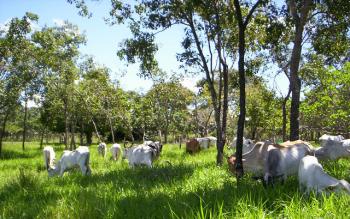 Manejo de pastagem ecológica pode renovar paisagens degradadas com produtividade e sustentabilidade