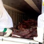 Homem de Ji-Paraná, rouba carga de carne, troca tiros com a Policia e acaba morto em Goiás, confira vídeo.