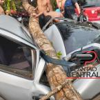 Veja vídeo! Árvore caí em cima de veículo  em balneário em Ji-Paraná
