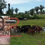 hauahuahauhauhauahhauhauahuahuahauhuPolicia Civil prende suspeito de furto de gado e recupera o gado avaliado em quase 50 mil reais