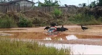 Vídeo! Corpo de foragido é  devorado por urubus a espera d Policia Técnica