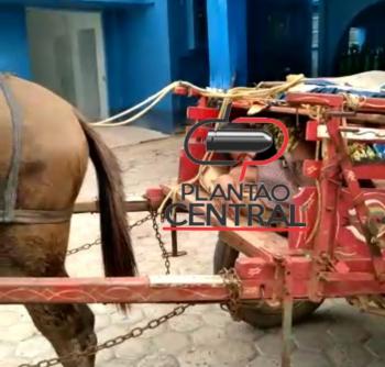 matéria  plantaocentral.com.br fotos vídeo  redes sociais