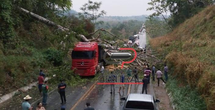 Árvore cai, atinge veículos e deixa BR-364 interditada