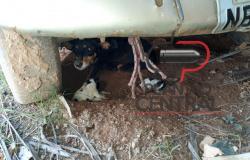 ONG Amparo Animal resgata cachorra logo  após parto e ser abandonada.