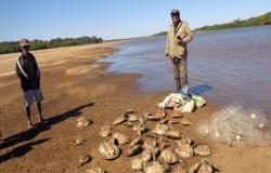 Operação apreende 104 tartarugas e 15 kg de pescado irregular em MT