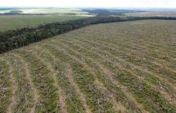 Estado reduz desmatamento em 15%