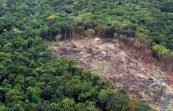 Governo deflagra operação contra crimes ambientais no Norte do Estado