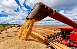 Soja e farelo têm maiores preços no país desde julho com demanda externa, diz Cepea