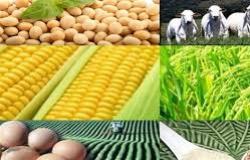 Exportações do setor agropecuário crescem mais de 150% em um ano