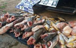Fiscalização apreende quase uma tonelada de pescado ilegal em MT