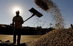 Para manter liderança mundial em café, Brasil precisa aumentar safra em 40% até 2030