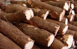 Mandioca vira iguaria da alta gastronomia na forma de tapioca, tucupi, polvilho e farinhas