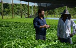 Agricultura familiar colhe resultados e se potencializa na zona rural