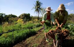 Agricultor familiar tem aumento no limite do crédito para aquisição de terra