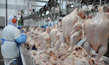 Carne de frango rejeitada pelos europeus é comercializada no Brasil sem restrições (Fotos:Arq.Web/Reprodução)
