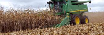Colheita de milho em Mato Grosso chega a 62% da área; produtividade aumenta