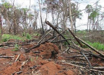Operação Abafa aplica R$4,2 milhões em multas por crimes ambientais