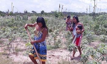 Mulheres indígenas trabalham em roça durante a pandemia em MT — Foto: Instituto Raoni/Divulgação