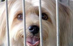 Donos que não recolherem cocô dos cachorros serão multados em Cuiabá