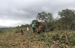MT registra a maior taxa de desmatamento da Amazônia Legal nos últimos 10 anos
