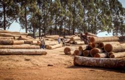 Sema flagra 1,5 mil ha de desmate ilegal; multa é de R$ 7,5 milhões