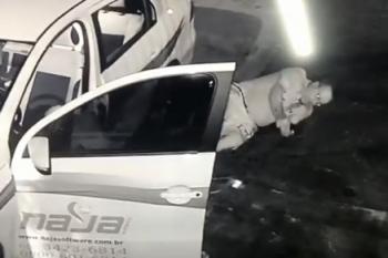 Novo vídeo mostra confronto entre empresário e ladrão em MT