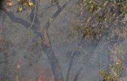 TCE-MT acompanha combate às queimadas em quatro municípios e contribui com ações do Poder Público