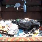 hauahuahauhauhauahhauhauahuahuahauhuMT - Recém-nascido é encontrado dentro de caminhão de lixo e por pouco não é prensado