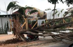 Temporal atinge Alta Floresta e causa destelhamentos e quedas de árvores