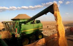 Cerca de R$ 2,4 bi podem ter deixado de circular em Mato Grosso com quebra no milho