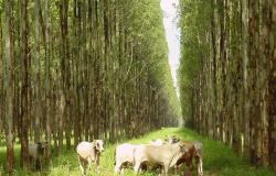 MT entre estados com mais projetos de agricultura pelo Programa ABC